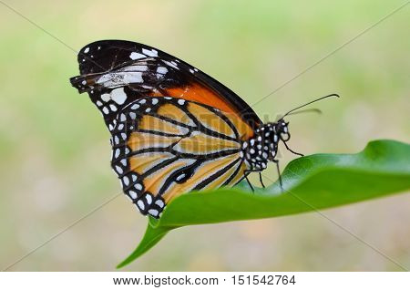 adult, animal, background, beautiful, beauty, black, brown, butterfly, close, color, colorful, day, decoration, design, detail, fauna, female, field, forest, garden, grass, green, leaves, life, macro, natural, nature, one, orange, phyciodes, plant, purple