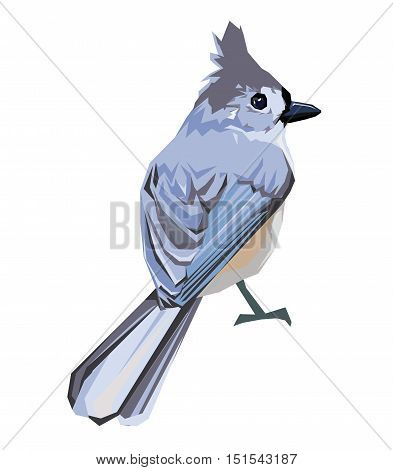 wildlife, bird, vector, illustration. Tufted titmouse bird Vector Illustration. bird vector