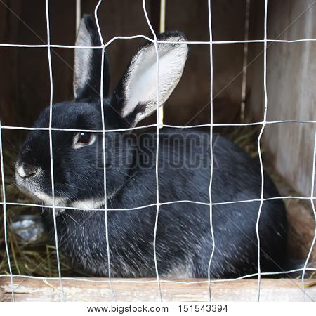 Rabbit or bunny in cell on farm