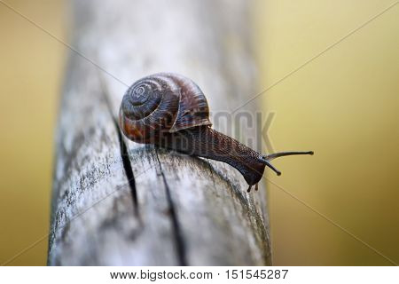 A little snail in the garden close up