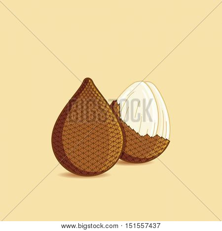Salak / snake skin fruit, salacca zalacca illustration