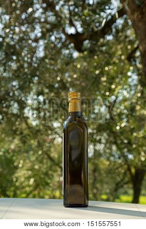 Green bottle of cold pressed Olive Oil with blurred European Olive tree during Autumn in Italy.