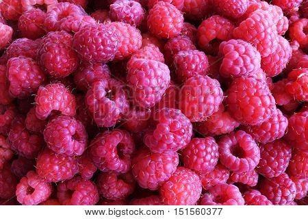 Lots of fresh, juicy raspberries for the background.