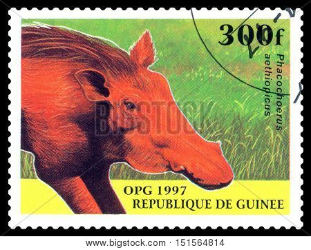 STAVROPOL RUSSIA - October 12 2016: a stamp printed in Guinea shows Desert warthog (Phacochoerus aethiopicus) circa 1997.