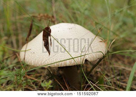 nature, plants, fungi, summer, eukaryotic, organisms, flora, Mycology, botany