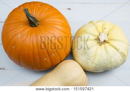 autumn harvest of pumpkin courgette and butternut squash