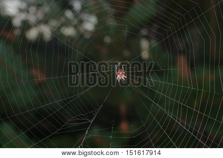 Image of dreadful spider on his net in dark forest