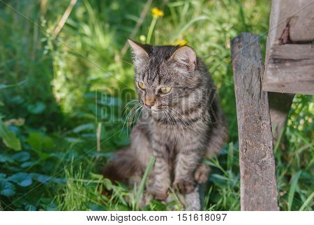 Young tabby cat hiding in secluded nook in summer garden