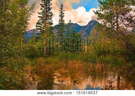 The beautiful swamp around the Basin National Historic Site, Sulphur Mountain, Banff, Banff National Park, Alberta, Canada