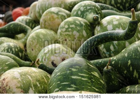 Sometimes called a bottle gourd the dark green speckled gourd is often called a speckled swan.