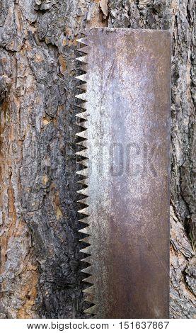 Carpentry Tool Near Tree