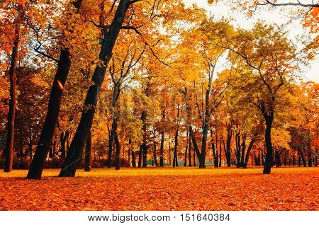 Autumn nature - autumn deserted park. Autumn park in bright colors- cloudy autumn landscape of lonely park with golden autumn trees and orange fallen leaves. Autumn park in cloudy autumn weather