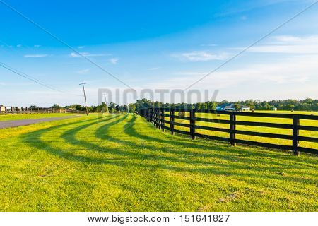 Green pastures of horse farms with fence line and shadow along a country road. Countryside summer landscape.