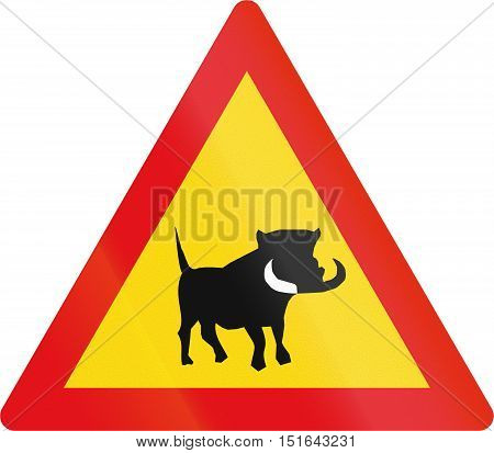 Temporary Road Sign Used In The African Country Of Botswana - Warthogs