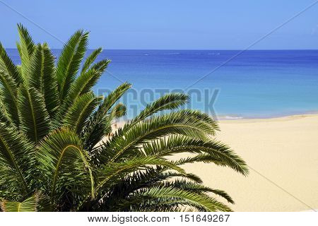 A palm and a view on the beach of Morro Jable in Fuerteventura.
