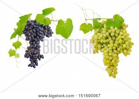 Two clusters of ripe blue and white table grapes on the vine with leaves on a light background