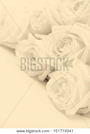 Beautiful white roses toned as wedding background. Soft focus. In Sepia toned. Retro style