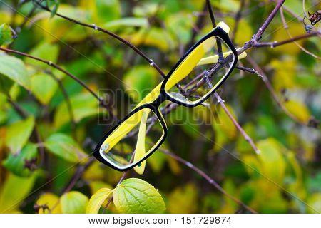 glasses, autumn tree, yellow and black plastic