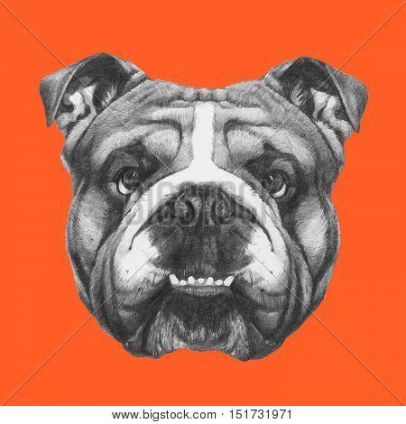 Hand drawn portrait of English Bulldog on colored background.