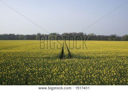Bright Summer Field