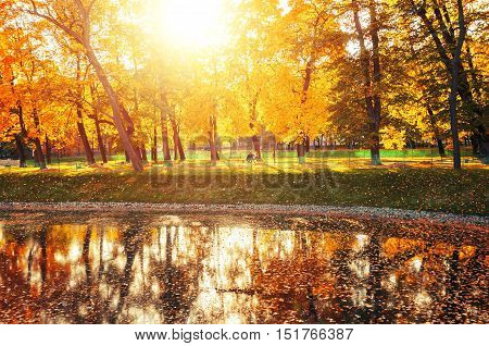 Autumn landscape of sunny autumn park under sunshine-autumn park with autumn trees and pond in soft light.Autumn landscape of autumn park with golden autumn trees and city pond.Autumn park in sunlight