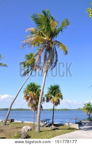 Palm Tree on Tropical Beach, Key West, Florida, USA