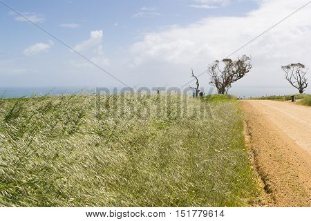 Coastal View,unsealed Dirt Road, Dead Tree, Fleurieu Peninsula, Sa