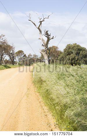 Unsealed Dirt Road, Dead Tree, Fleurieu Peninsula, Sa