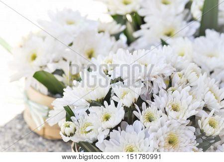 chrysanthemum morifolium Ramat or chrysanthemum flower in the vase