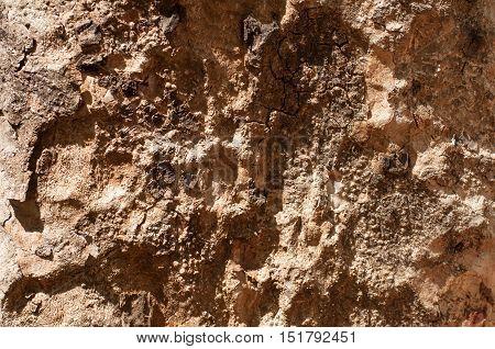 Tropical tree bark wood texture close up