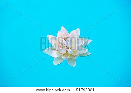 Single White Water Lily Flower Floating On Water