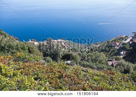 Aerial view of Amalfi coast with olives and vineyards
