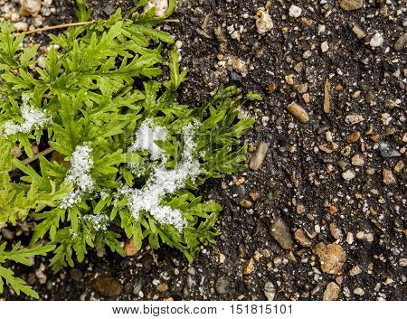 Green plant, sagebrush, green plant on the asphalt, grass, fall back