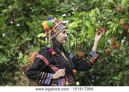 Tribal girl was picking rambutan fruither sale rambutan.