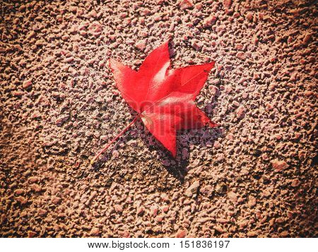 Single Red maple leaf fall on stone in autumn