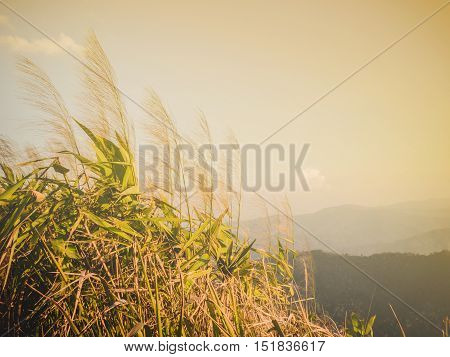 Vintage grass on mountains for background, in Phayao,Thailand