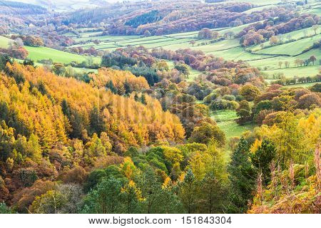 Pastoral fields trees and hedges in morning mist Autumn Fall. Powys Wales. Low sunlight green peaceful
