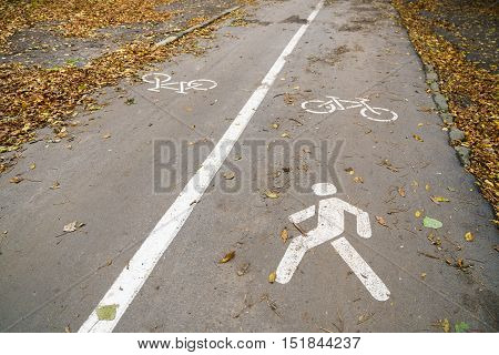 Part of the pedestrian and cycle track with painted symbols and pedestrian rights autumn.