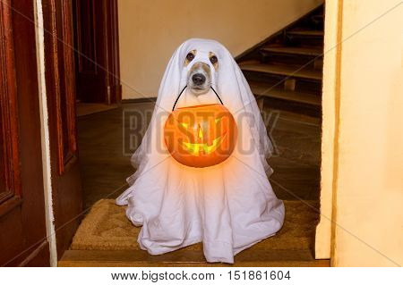 Halloween  Ghost  Dog Trick Or Treat