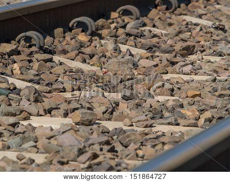 The steel railway tracks laid on concrete ties.