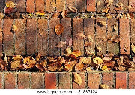 old brickwork stairs with fallen hornbeam leaves