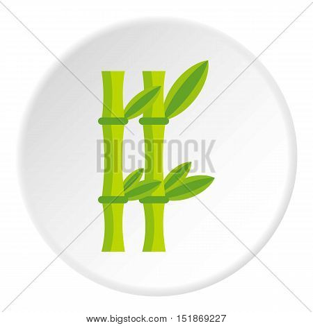 Bamboo icon. Flat illustration of bamboo vector icon for web
