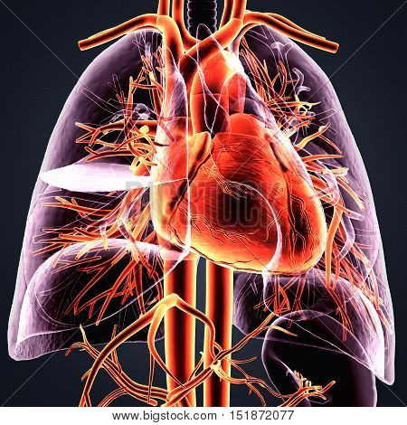 3Dillustration medical illustration of the heart and lung