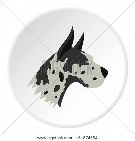 Great dane dog icon. Flat illustration of great dane dog vector icon for web