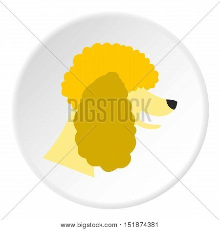 Poodle dog icon. Flat illustration of poodle dog vector icon for web