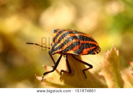 Nature, animals, fauna, insects, bugs, beetles, summer, Coleoptera, insects squad poster