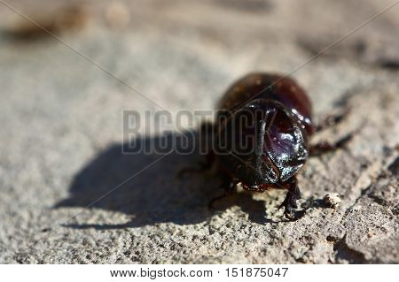Nature, animals, fauna, insects, bugs, beetles, summer, Coleoptera, insects squad