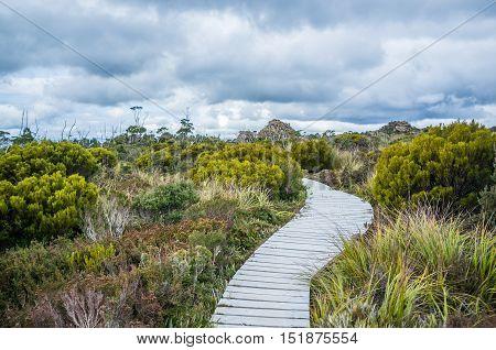 Winding Boardwalk Among Native Vegetation In Hartz Mountains National Park, Tasmania