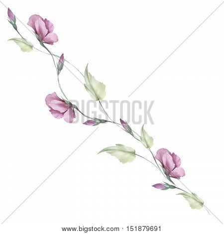 Delicate composition of flowers buds. Watercolor illustration