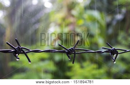 Barbed wire under the rain. Water drops on sharp wire knots. Closeup photo of garden fence protecting property from forest. Green background. Black metal wire border picture. Home safety concept image